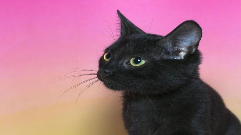L'anecdote du chat noir d'Ilie Nastase en 1977 est une des plus légendaires de l'histoire de Roland-Garros.